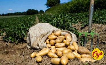 Feliz día de la Agricultura 🧑🌾